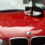 How to Stop Cats Sitting on your Car?